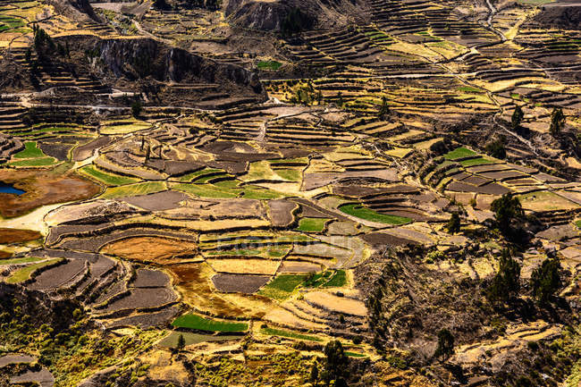 Peru, Arequipa, Caylloma, Colca Canyon — Photo de stock