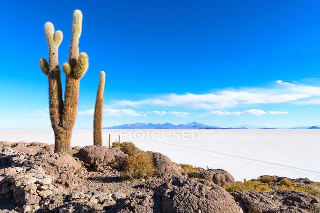Bolívia, Departamento de Potos, Uyuni, Isla Incahuasi, vista de cactos na ilha em sal — Fotografia de Stock