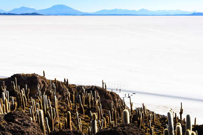 Bolivia, Departamento de Potos, Uyuni, Isla Incahuasi, view of cacti on island in salt — стоковое фото