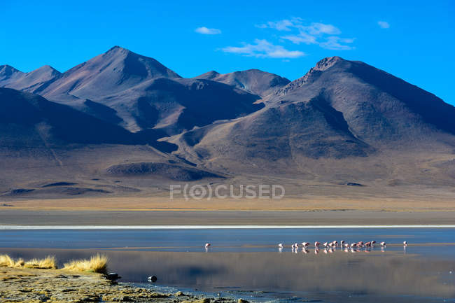 Bolivia, Laguna Canapa, scenic mountains landscape with by lake with flamongos — стоковое фото
