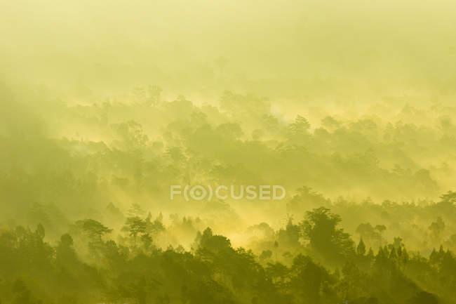 Indonesien, Bali, Kabliats Bangli, auf den Vulkan Batur, Sonnenstrahlen und Nebel Winde über einen Wald — Stockfoto