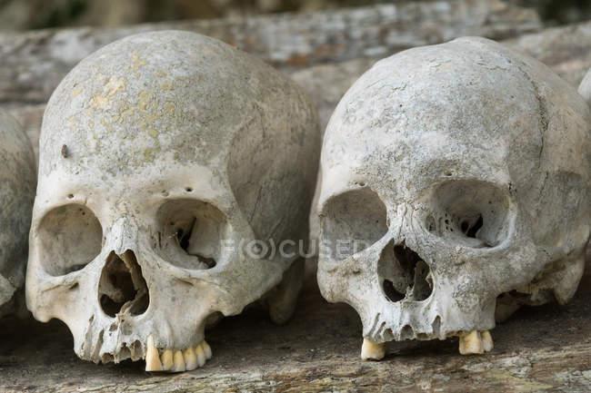 Indonesia, Sulawesi Selatan, Toraja Utara, Torajaland, primer plano de cráneos, tumbas de roca, culto a la muerte - foto de stock
