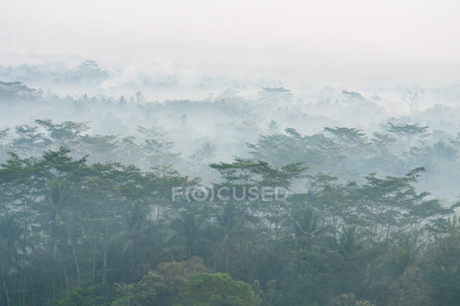 Indonesia, Java Tengah, Magelang, view from the temple, Buddhist temple, Temple complex of Borobudur, foggy forest aerial view — Stock Photo