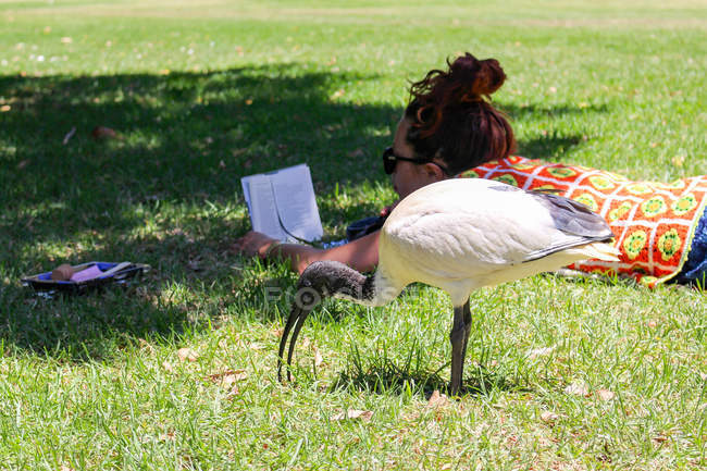 Australia, Sydney, jardín botánico, mujer acostada en el pasto - foto de stock