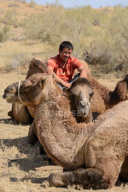 Male camel driver and dromedaries resting in desert of Nurota tumani, Uzbekistan — Stock Photo