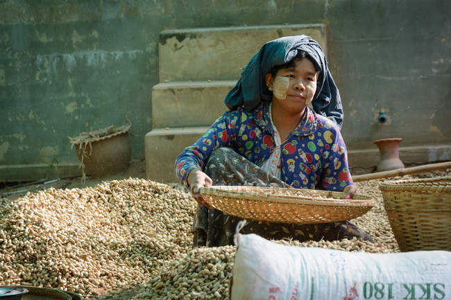 Asian woman picking peanuts on rural street, Mandalay Province, Taung Ba, Taungtha, Mandalay Region, Myanmar — Stock Photo