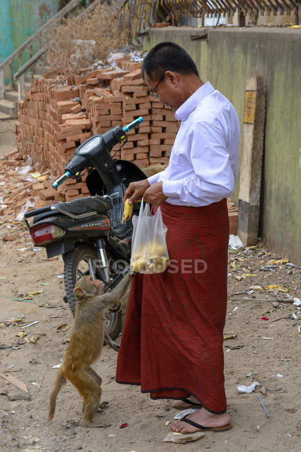 Buddhist monk feeding monkey with bananas,  Myingyan, Mandalay Region, Myanmar — Stock Photo