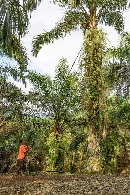 Indonesia, Sumatera Utara, Kabul Langkat, man at palm oil plantation — Stock Photo
