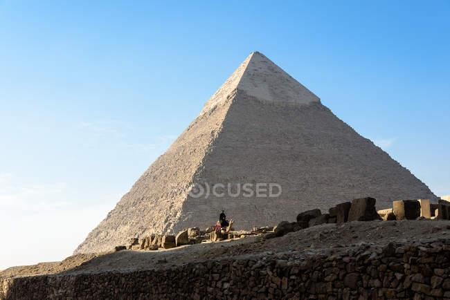 Єгипет, Гіза Gouvernement, Гіза, людина на верблюді по піраміди Гізи — стокове фото