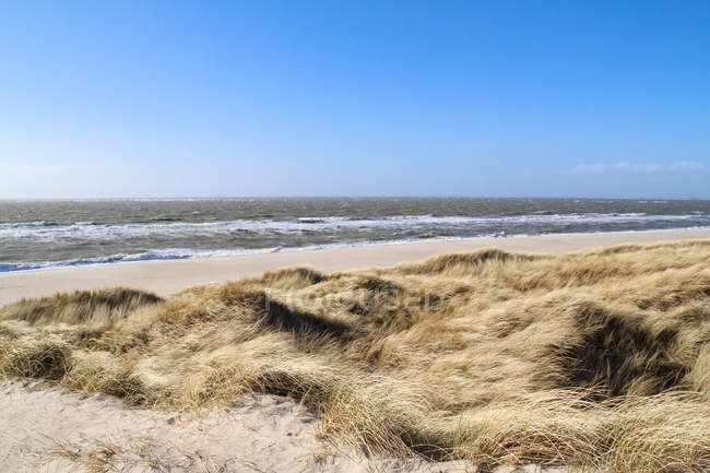 Germany, Schleswig-Holstein, Sylt, List, Grassy and sandy seashore view — Stock Photo
