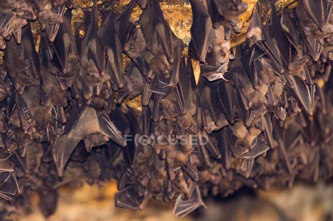 Indonesien, Bali, Karangasem, Fledermäuse im Tempelkomplex Pura Goa Lawah — Stockfoto