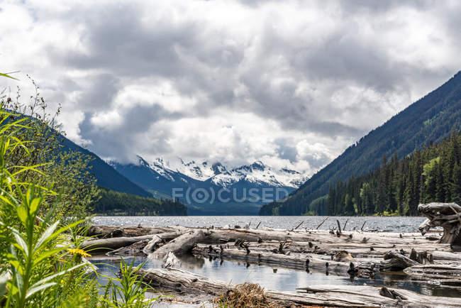Канада, Британская Колумбия, побережье горы, журналы, дрейфующих в горное озеро недалеко от побережья гор — стоковое фото