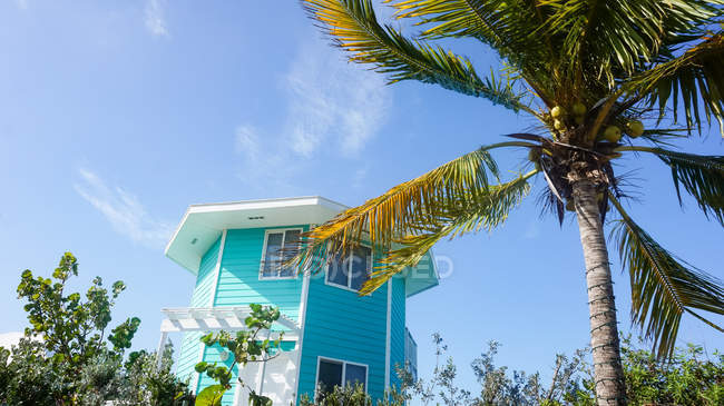 Bahamas, Gran Exuma, Staniel Cay, palmera frente a la casa azul - foto de stock