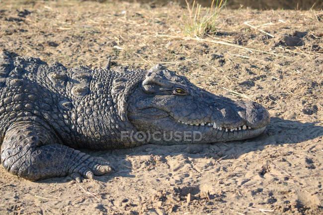 Namibia, Okapuka-Ranch, Safari, Pirschfahrt, Nahaufnahme eines Alligators am Boden — Stockfoto