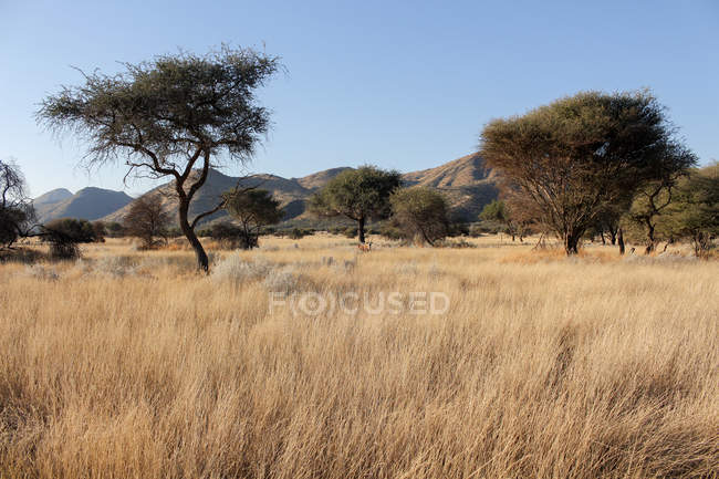 Namibia, Okapuka Ranch, Safari, Game Drive, Oryx antelope — Stock Photo