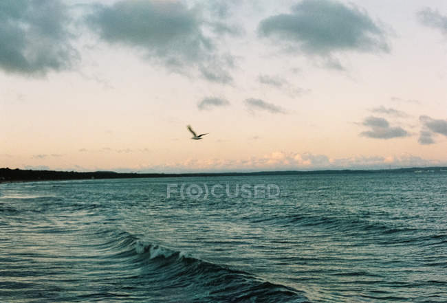 Germany, Mecklenburg-Western Pomerania, Binz, Scenic evening seascape, flying seagull — Stock Photo