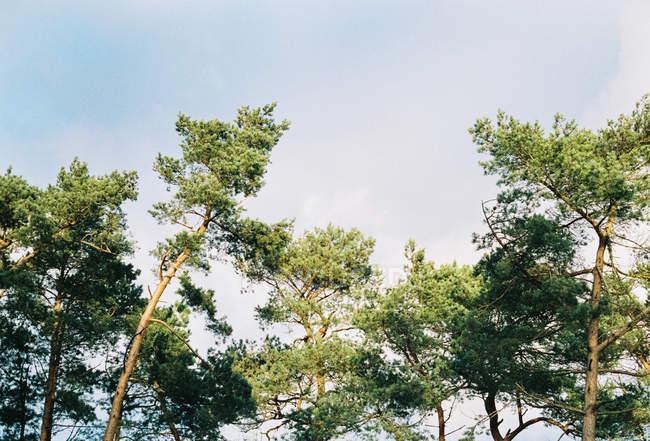 Зеленые кроны ветровых деревьев в немецком городе Баден-Баден. — стоковое фото