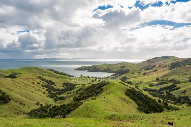 Nova Zelândia, Waikato, Manaia, verde paisagem montanhosa na costa do mar — Fotografia de Stock
