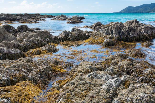 Новая Зеландия, Бухта изобилия, Te Каха, яркое солнце на камень побережье в Новой Зеландии — стоковое фото