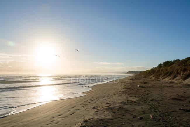 Новая Зеландия, Гисборн, Pouawa, Лонели в вечернее солнце — стоковое фото