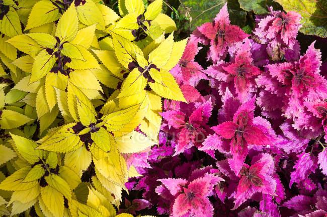 Новой Зеландии, Веллингтон, Буш с красочные осенние листья — стоковое фото