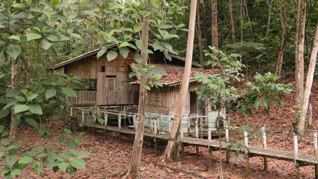 Malaysia, Sarawak, Lubok Antu, Borneo, wooden hut in Batang Ai National Park — Stock Photo