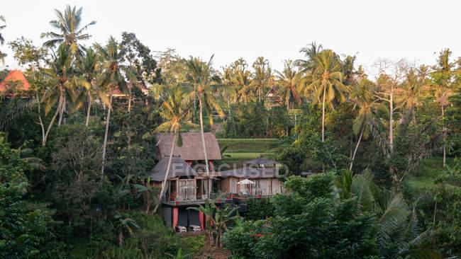 Indonesia Bali Kabudaten Gianyar Guesthouse Between Palm