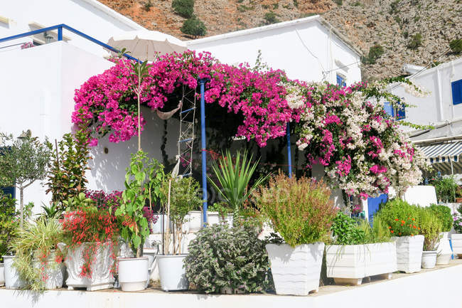 Greece, Crete, Lutro, flowers and green plants in pots — Stock Photo