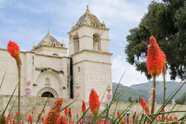 Pérou, Arequipa, Yanque, monastère dans les fleurs de la vallée du Colca, rouge sur le premier plan — Photo de stock