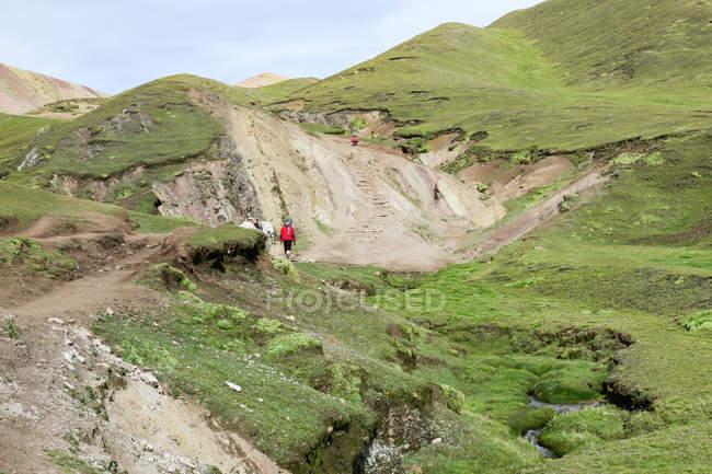 Escursionista irriconoscibile in abiti tradizionali con cavallo bianco sulla strada per Rainbow Mountain a Cusco, Qosqo, Perù . — Foto stock