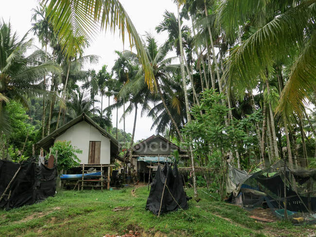 Таїланд, Чанг Wat Пханг Нга, тамбон Khuekkhak, хатин у лісовій дерево пальми у Talaenok — стокове фото