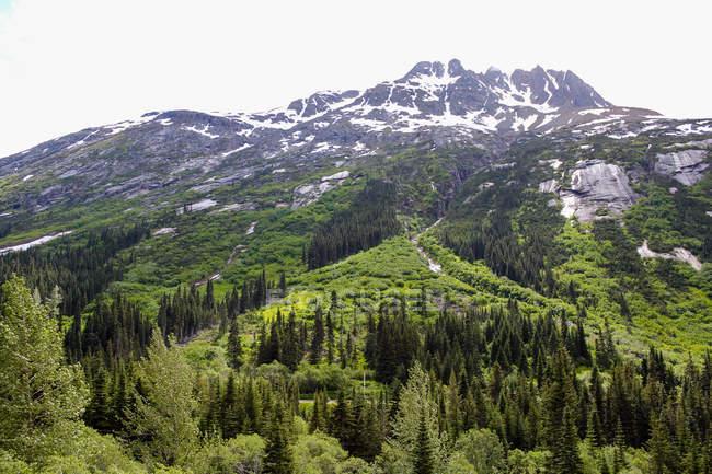 USA, Alaska, Skagway, pristine nature of Alaska, forest and mountains view — Stock Photo