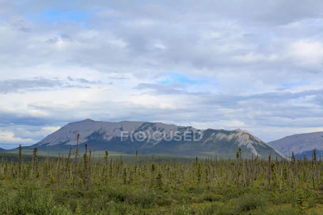 Канада, территория Юкон, Юкон, на Dampster шоссе судя Север, живописный пейзаж с горы на фоне и дикий луг — стоковое фото