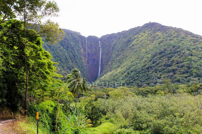 USA, Hawaï, Honokaa, paysage pittoresque avec une belle nature et leurs impressions — Photo de stock