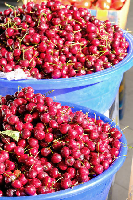 Containers of fresh picked cherries in bright sunlight — Stock Photo