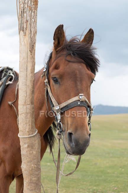 Kirgisistan, Naryn Region, Kochkor District, Pferde stehen im Feld in Kirgisistan — Stockfoto