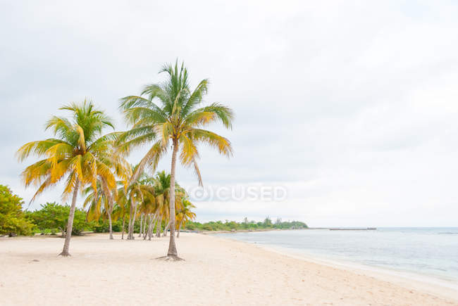 Cuba, Cienfuegos, Playa Larga, pig bay, scenic seascape with palms on sandy beach — Stock Photo