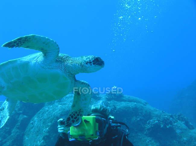 Schildkröten Nahaufnahme unter Wasser in natürlichem Lebensraum — Stockfoto