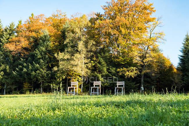 Alemanha, Oberwolfach, Westweg, cena da floresta outonal com cadeiras de madeira — Fotografia de Stock