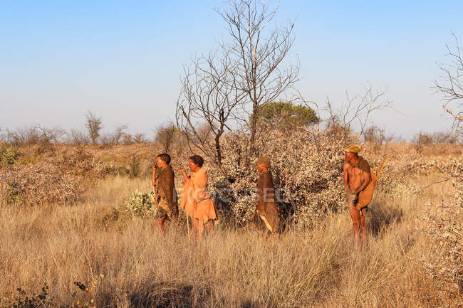 Namibia, Ghanzi Trailblazers, Safari, Bushwalk, Bushmen on the way — Stock Photo