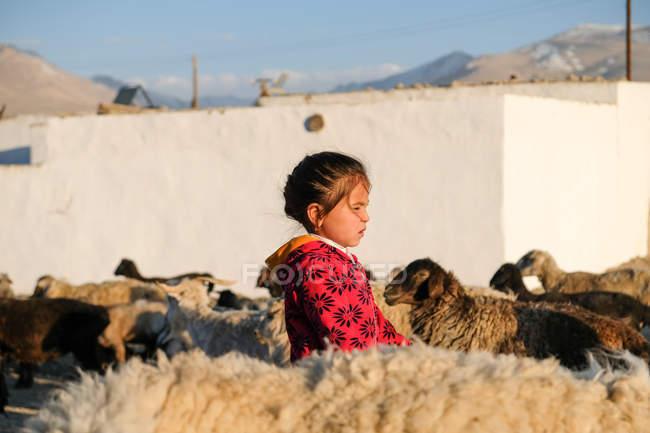 Tayikistán, pastora por la noche cuando las ovejas regresan a la aldea Alichur - foto de stock