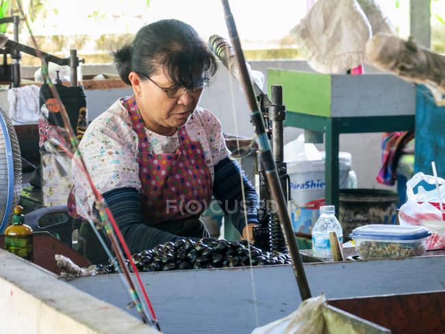 Trabalhador feminino da fábrica de caju em Khao Lak, Tambon Khuekkhak, Chang Wat Phang-nga, Tailândia — Fotografia de Stock