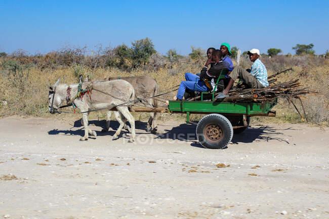 Botswana, Fahrt ins Okavango-Delta, Eselskarren — Stockfoto
