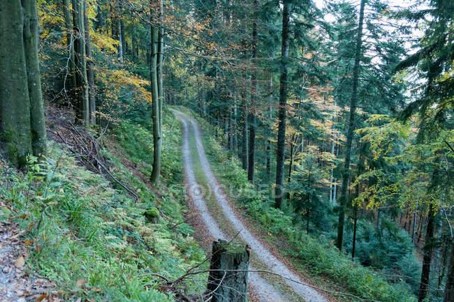 Alemanha, Bad Rippoldsau-Schapbach, Alexanderschanze, cena com caminho entre as árvores da floresta — Fotografia de Stock