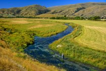 Unrecognizable person fishing in Southland Spring Creek, New Zealand — Stock Photo