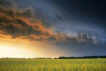 Поле рапса и штормовые облака вблизи Glenboro, Манитоба, Канада. — стоковое фото