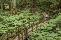 Giant Cedars Boardwalk Trail al Mount Revelstoke National Park, Columbia Britannica, Canada — Foto stock