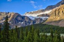 Ghiacciaio Crowfoot e alberi forestali di Icefields Parkway, Banff National Park, Alberta, Canada — Foto stock