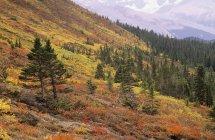 Herbstliches Laub des Wilcox Pass über dem Wirrwarr Creek Valley, Columbia Eisfelder, Jaspis-Nationalpark, Alberta, Kanada — Stockfoto