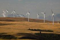 Molinos de viento generando energía cerca Pincher Creek, Alberta, Canadá. - foto de stock